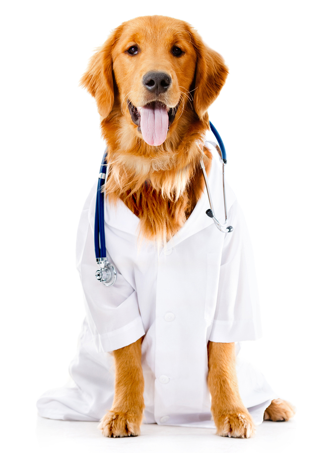how to detect prostate cancer in dogs