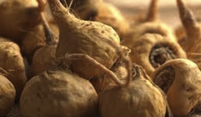 The Smuggling of Maca and Why Prices will Skyrocket