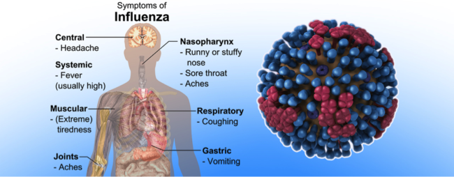 Preventing and Treating the Flu Naturally