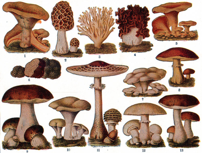 Mushrooms Protect Against Prostate Cancer